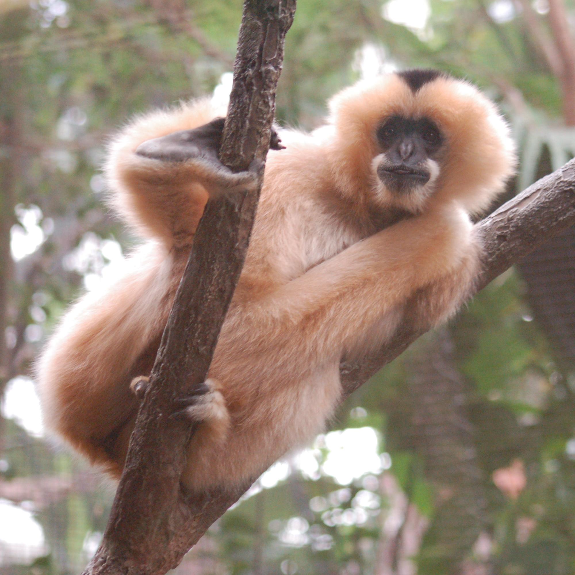 File:Unidentified Monkey Looking 2000px.jpg - Wikimedia Commons