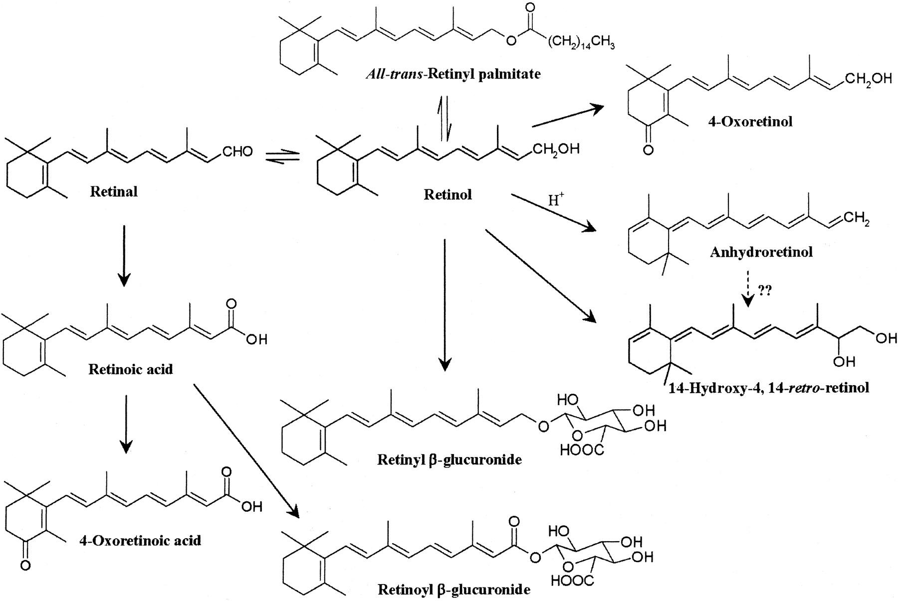 File:Vitamin A Metabolism.large.jpg - Wikimedia Commons