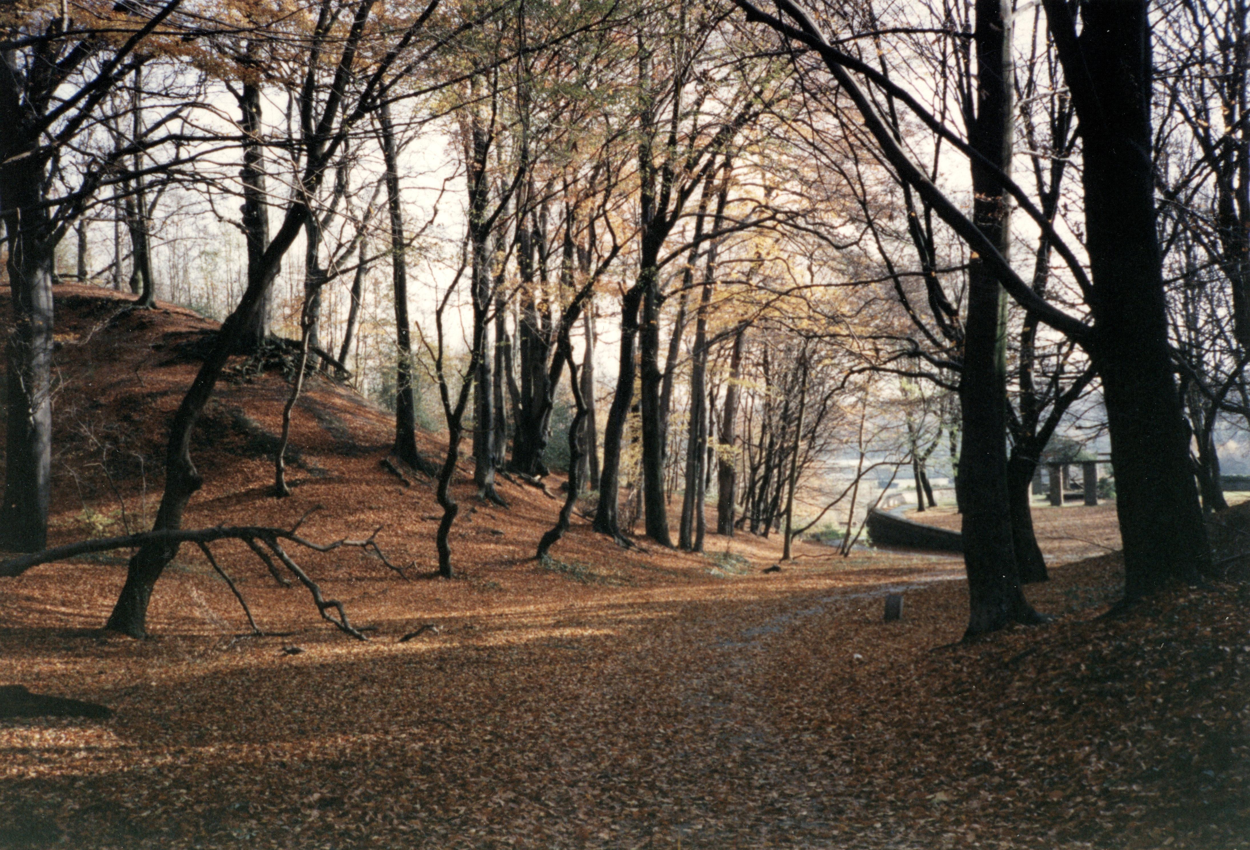 DateiWald im Herbst bei Haus Horst, Essenjpg – Wikipedia
