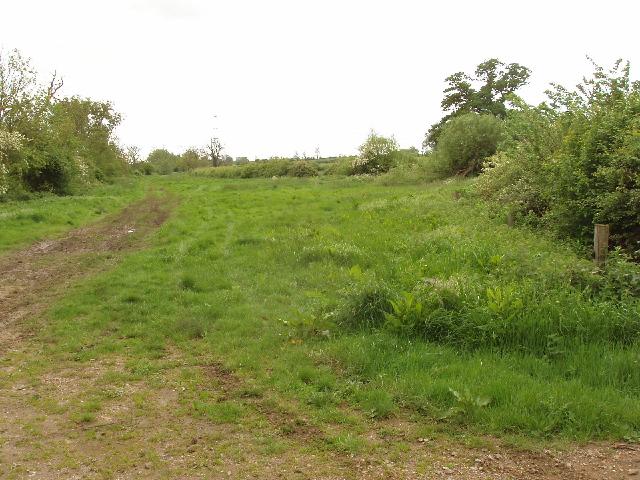 Wide grass verge on Midshires way bridleway - geograph.org.uk - 437508