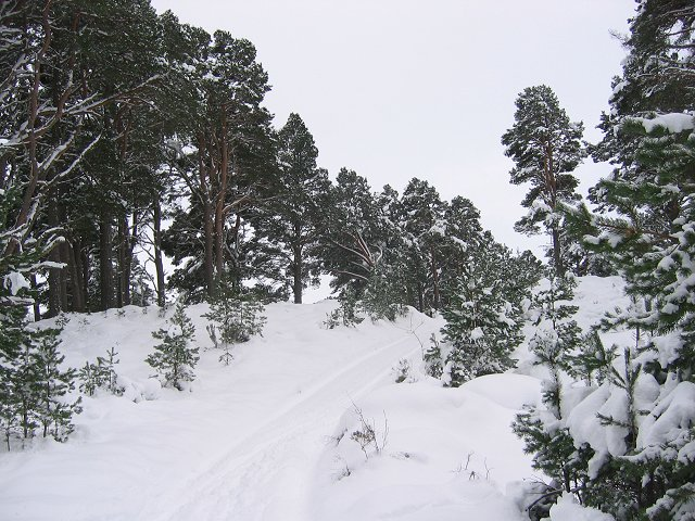 Abernethy Forest - geograph.org.uk - 134018