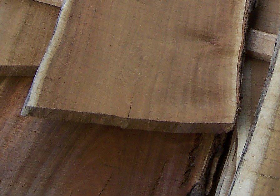 Acacia Heterophyllia. Tonewood Profile. Vanuatu Blackwood