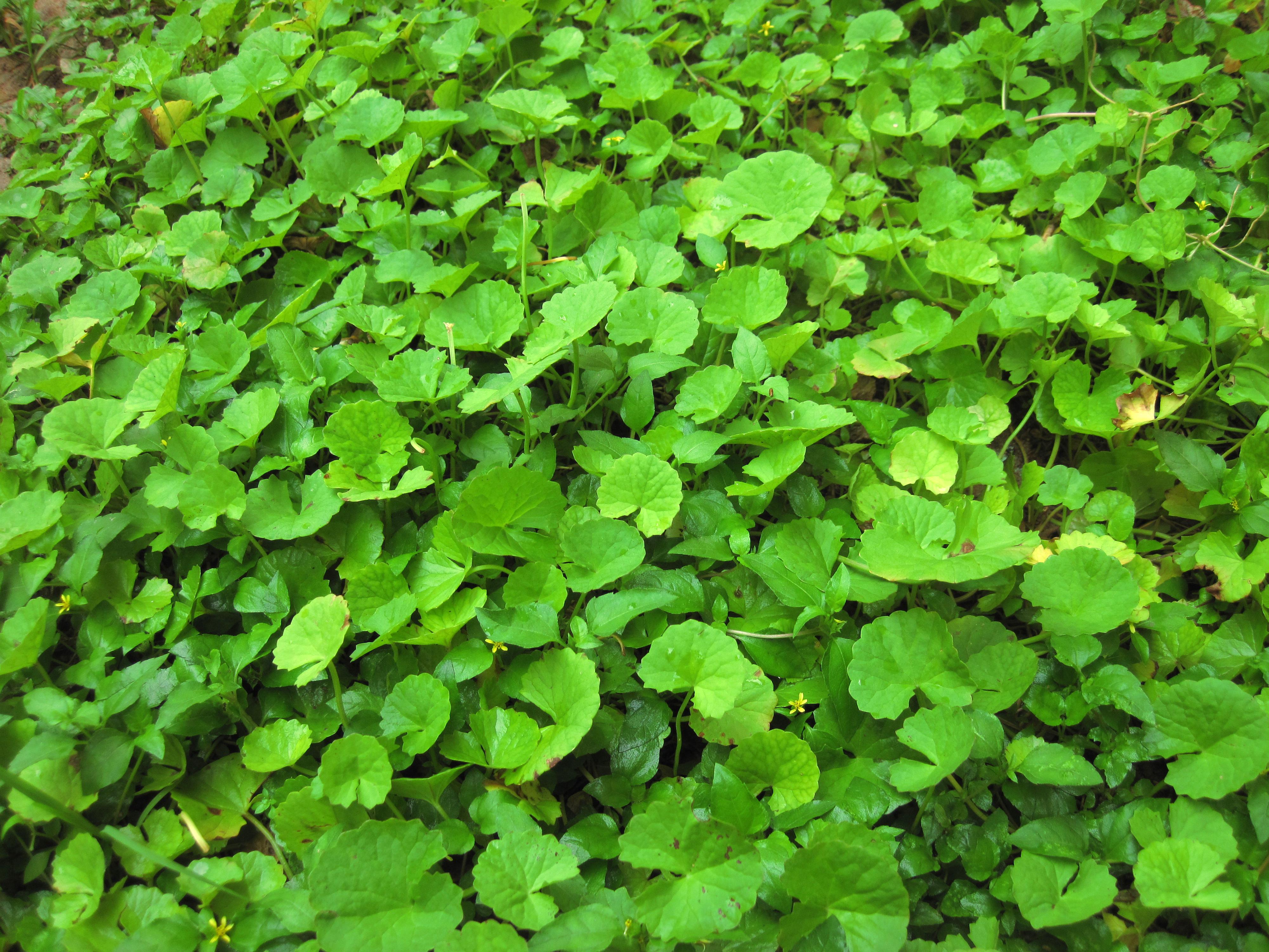 Mint Leaf Indian Restaurant Heidelberg Vic