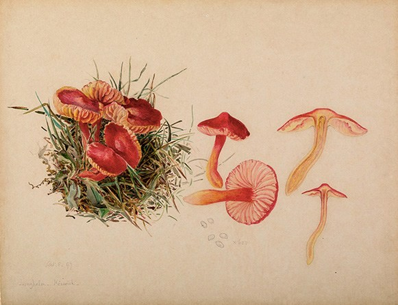 File:Beatrix Potter- Mycology. Source- Armitt Museum and Library.jpg