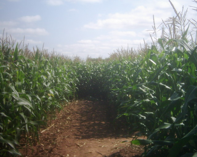 Bickleigh , Bickleigh Maize Maze - geograph.org.uk - 1223716.jpg