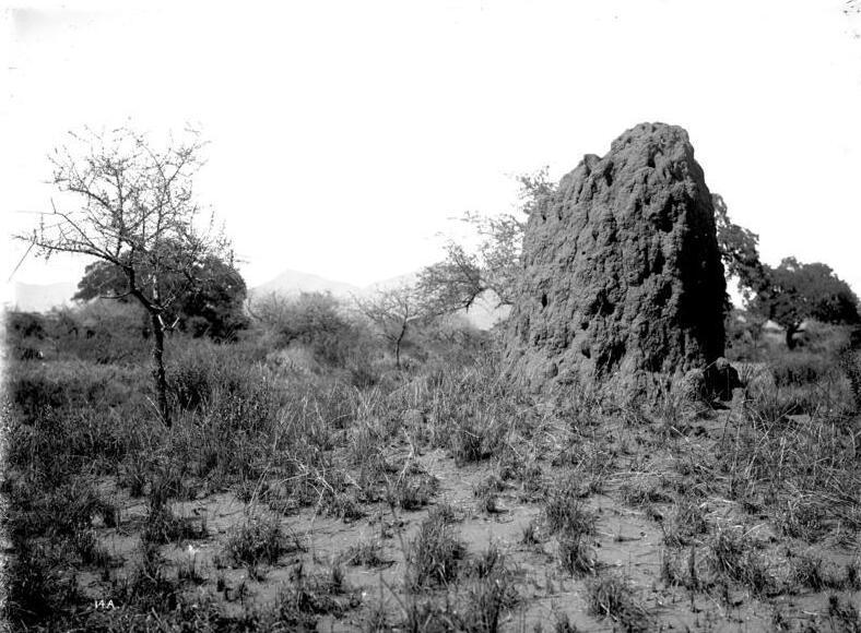 Bundesarchiv Bild 105-DOA0014, Deutsch-Ostafrika, Termitenhügel.jpg