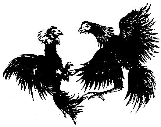 Dibujos Gallos Para Colorear: Gallos Peleando Para Colorear