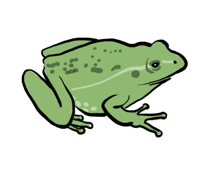 http://upload.wikimedia.org/wikipedia/commons/5/59/Frog_illustration.jpg