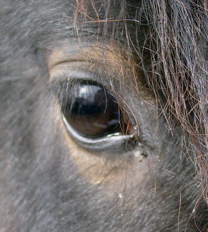 File:HorseEye.jpg