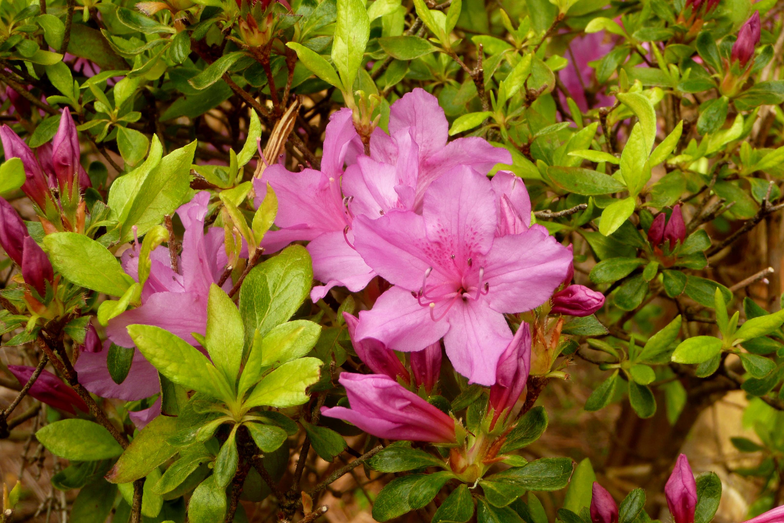 Flowers In Japanese Gardens