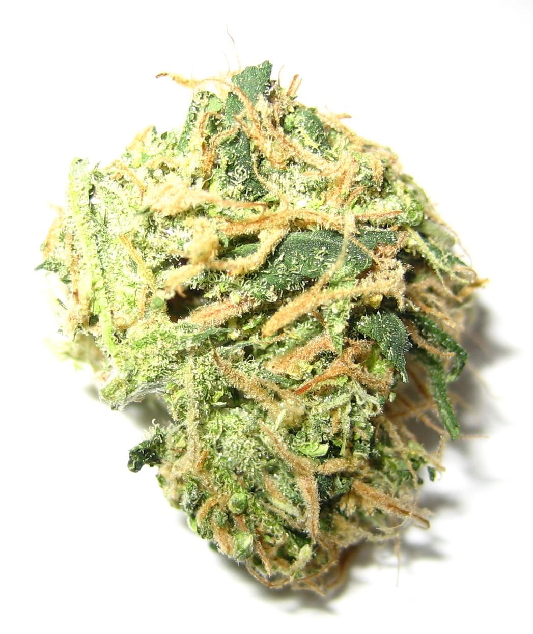 weed club