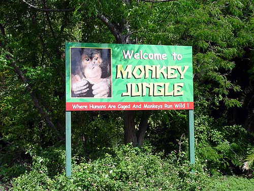 File:Monkey-Jungle-Attraction-Miami.jpg
