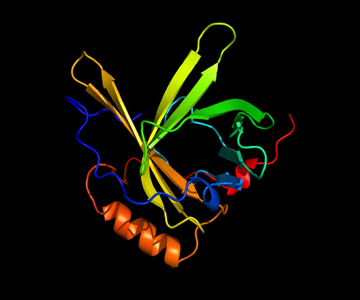 Apolipoprotein D - Wikipedia