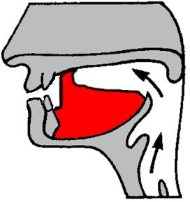 Subapical retroflex plosive