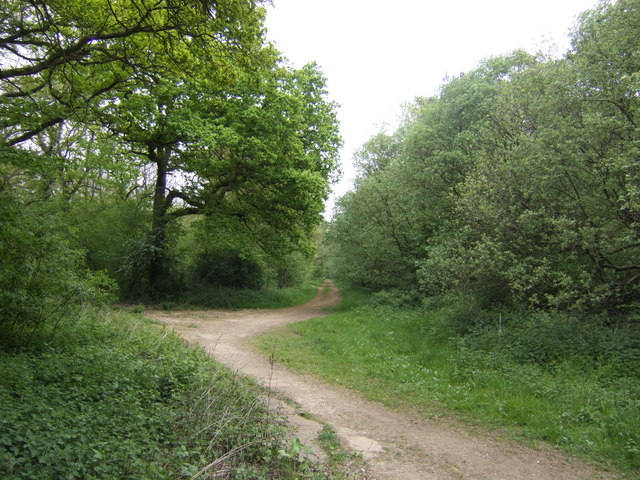 Ride into Salcey Forest - geograph.org.uk - 422644