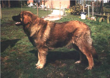Leonberger - Dog Scanner