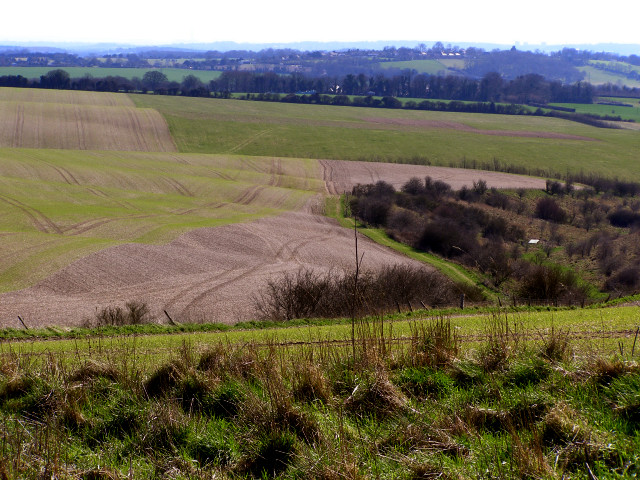 Undulations in the chalk landscape of Longwood Warren - geograph.org.uk - 147857