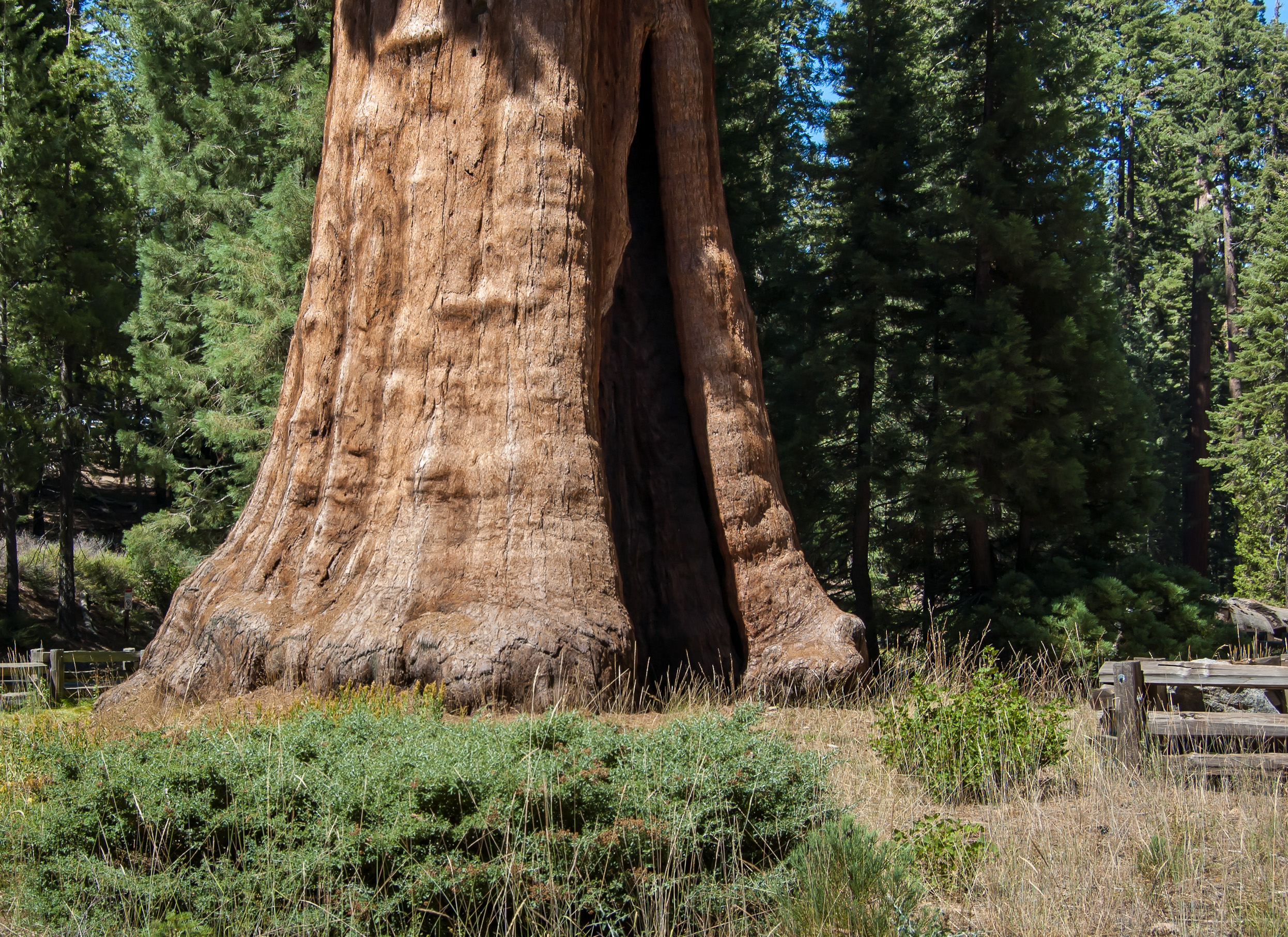 free online personals in sequoia national park Sequoia national park and the giant sequoia trees book online or call us toll-free 8555845294.