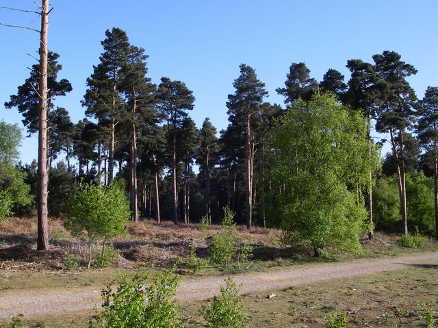 Woodlark area in Tunstall Forest. - geograph.org.uk - 420865