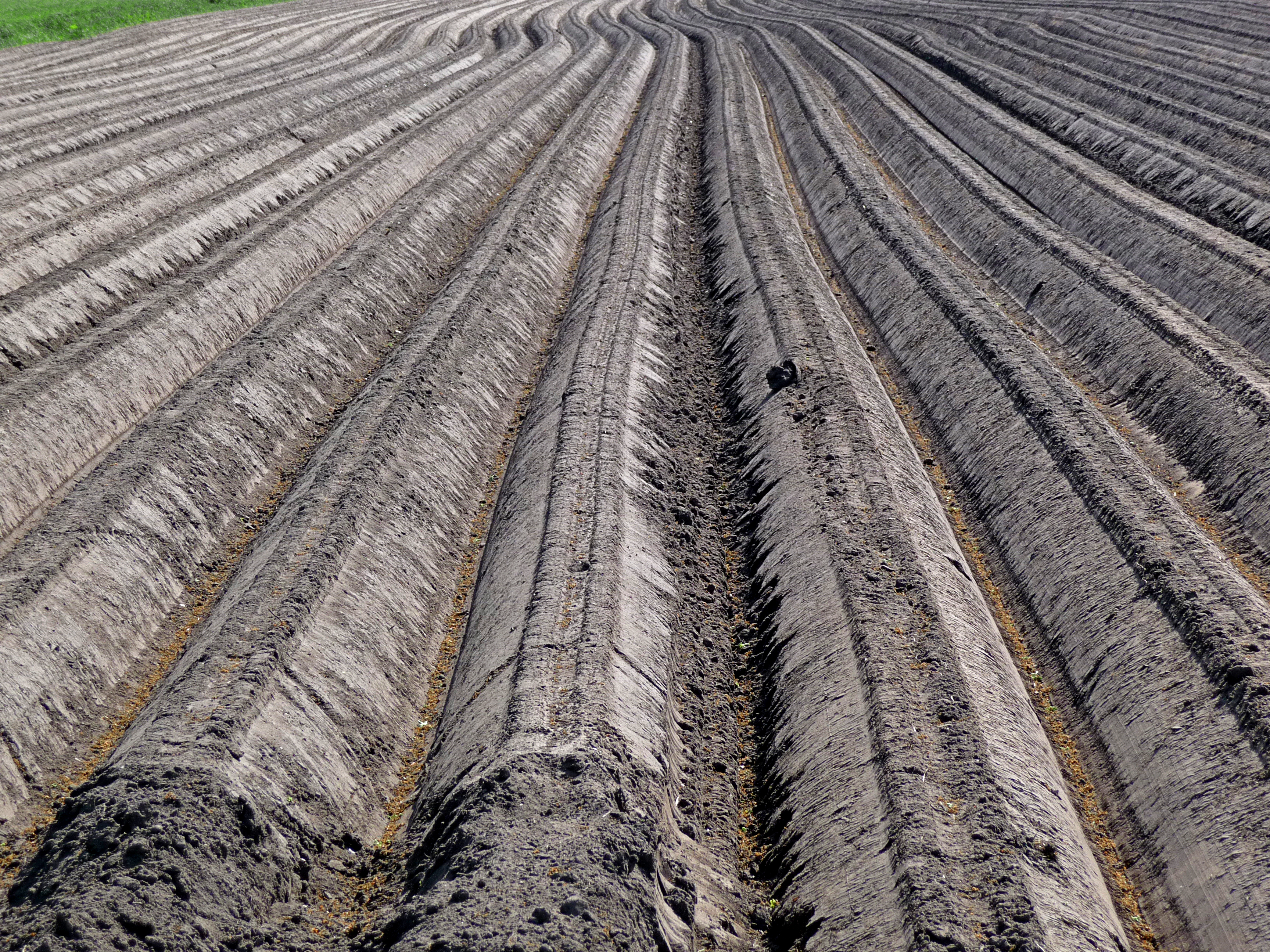 File a close up view over the long lines in the soil of for Where can i find soil
