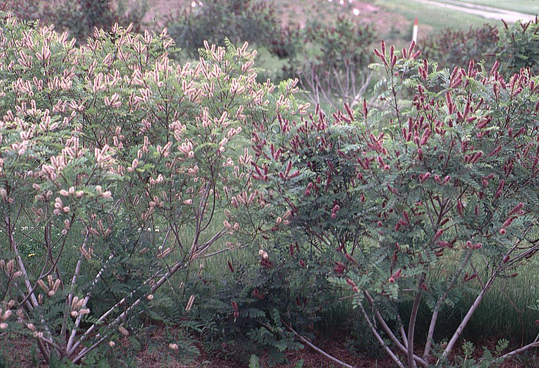 фото осенние многолетние медоносы
