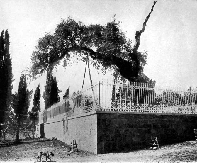http://upload.wikimedia.org/wikipedia/commons/5/5a/Avraham_oak_1912.jpg