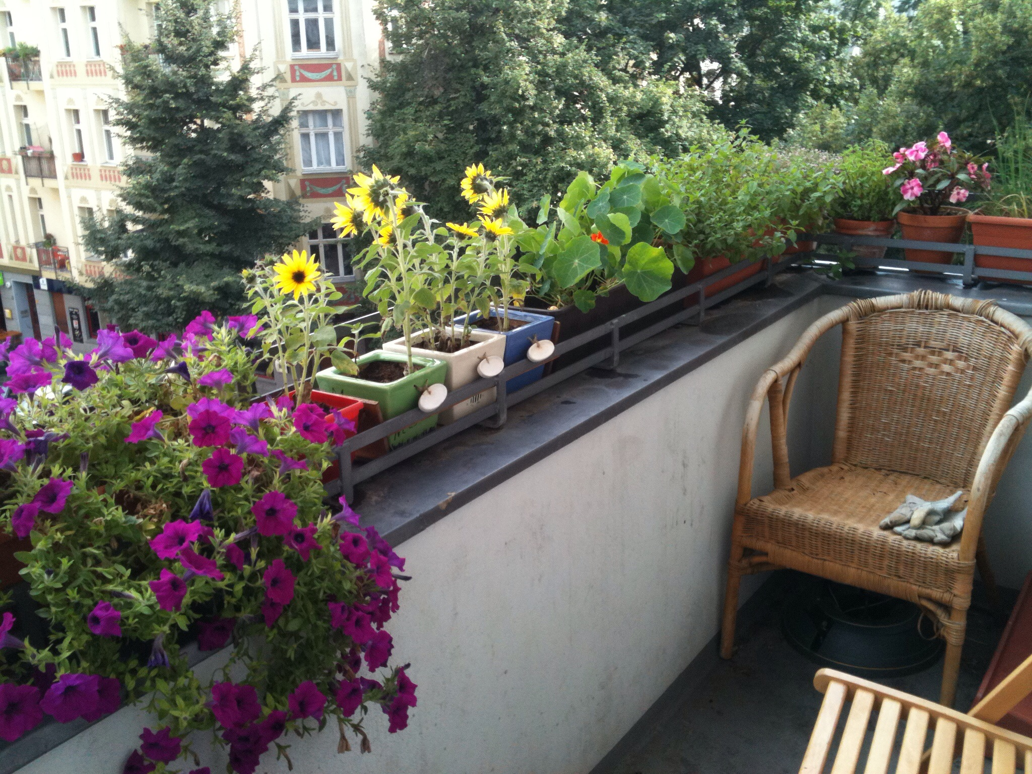 File berlin balcony with wikimedia commons for Balcony flowers