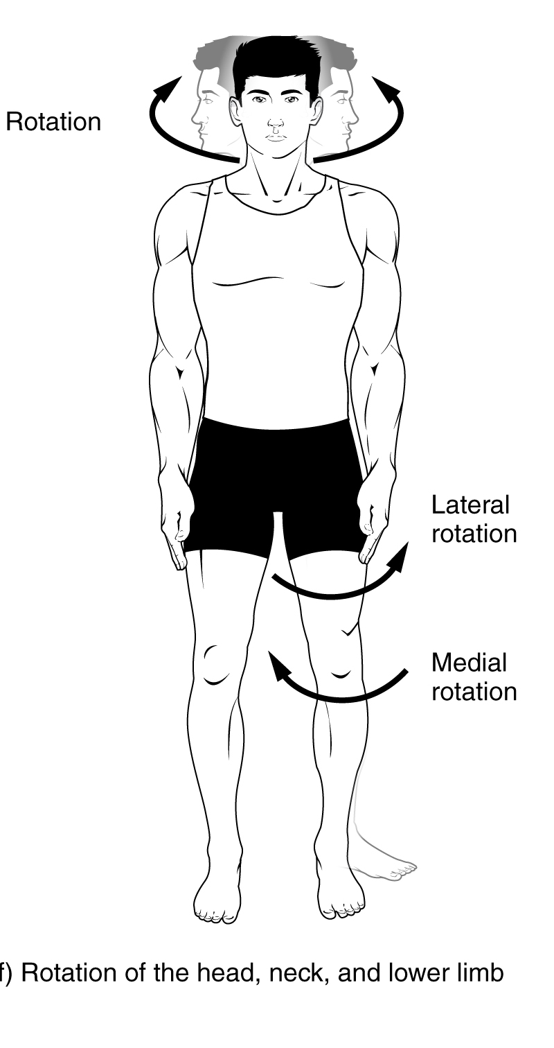 Depression anatomy definition