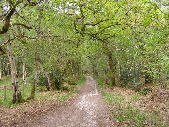 Bridleway descending into Dawkins Bottom, Roydon Woods - geograph.org.uk - 170444