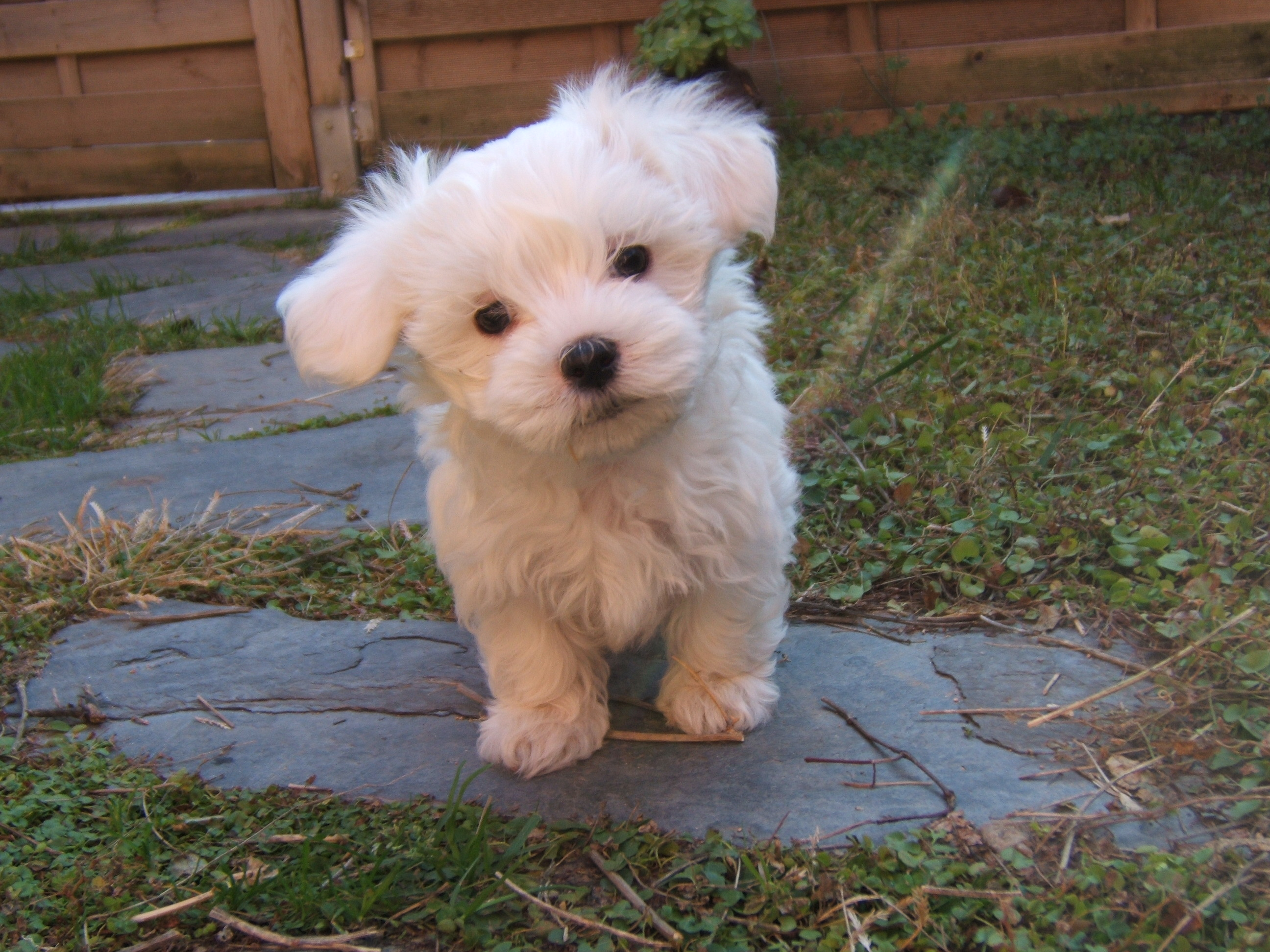 Http Www Coton De Tulear Care Com Traveling With Your Dog Html