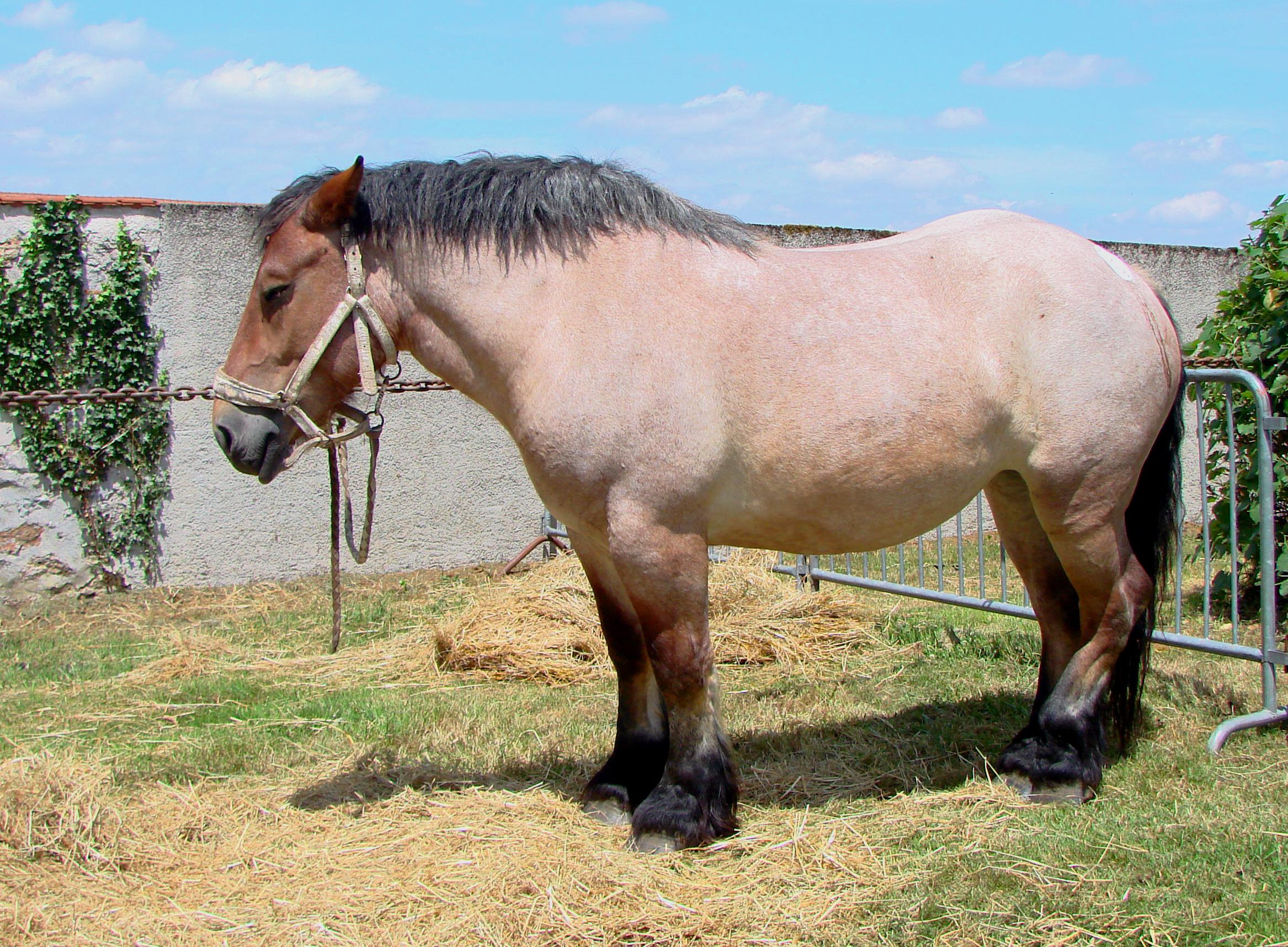 Blueys Horse Riding Magnetic Island