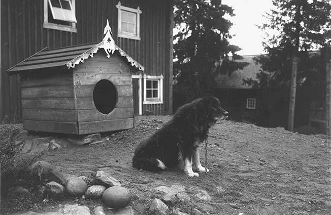 Dalbohund.jpg