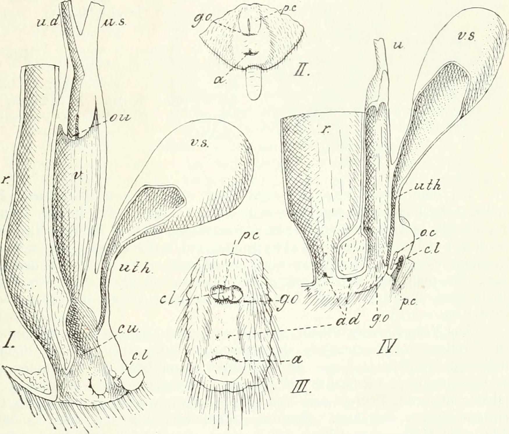 File:Die Säugetiere. Einführung in die Anatomie und Systematik der ...