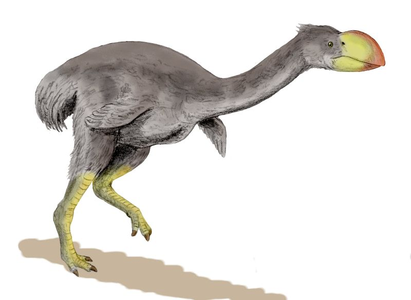 http://upload.wikimedia.org/wikipedia/commons/5/5a/Dromornis_BW.jpg