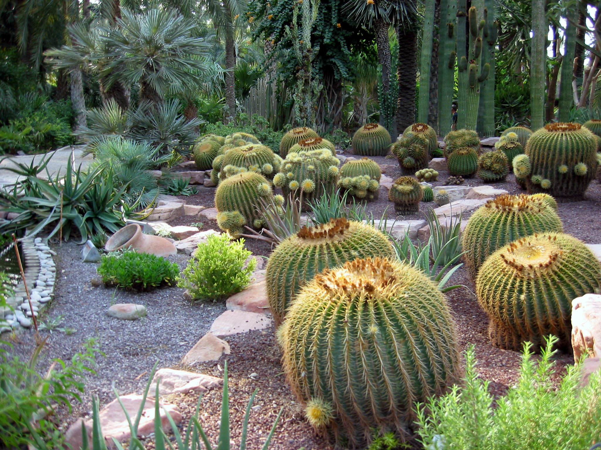 http://upload.wikimedia.org/wikipedia/commons/5/5a/Echinocactus-grusoni-group.jpg