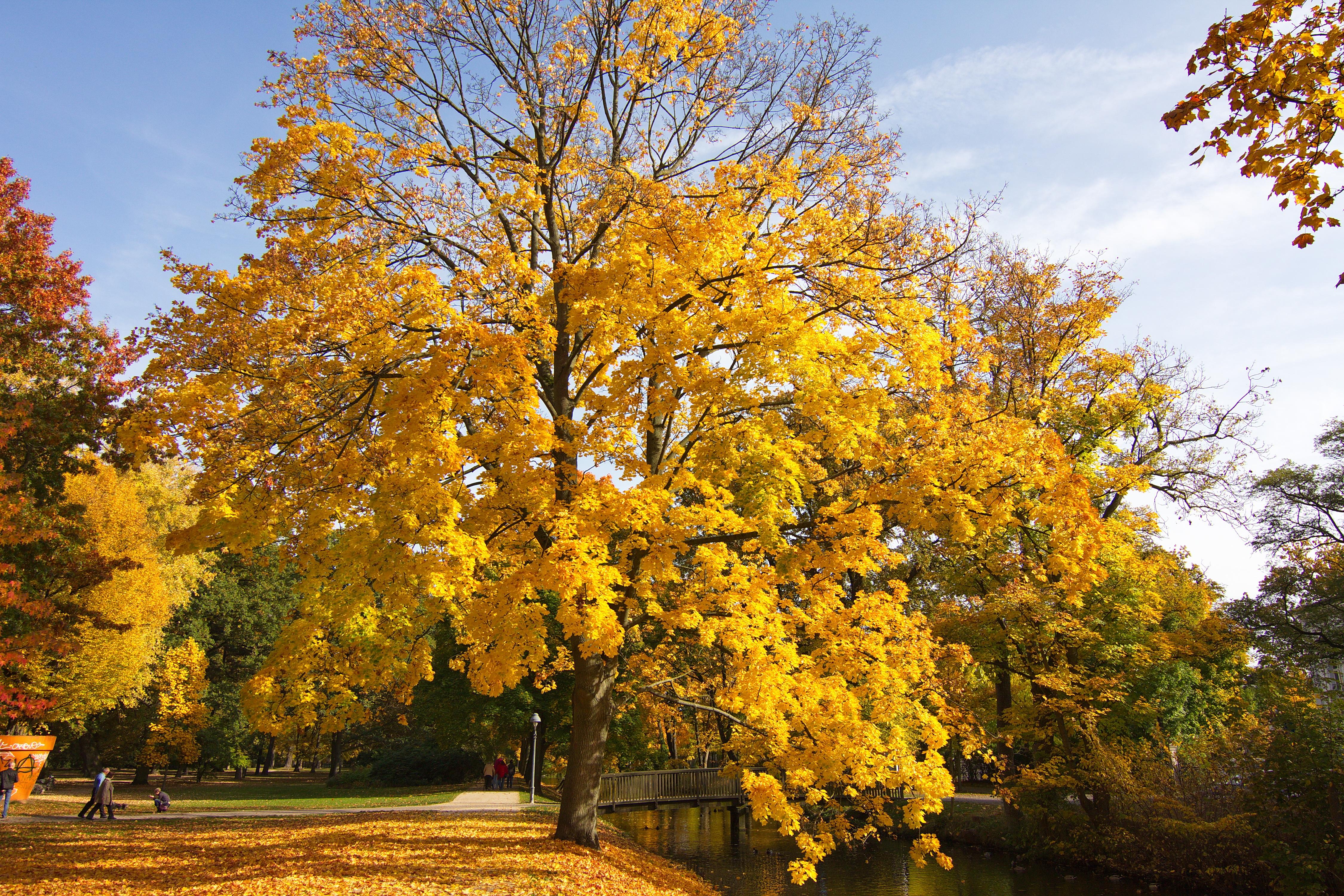 Filefranzösischer Garten Celle Img 3157jpg Wikimedia Commons