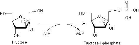 fructokinase reaction alt text