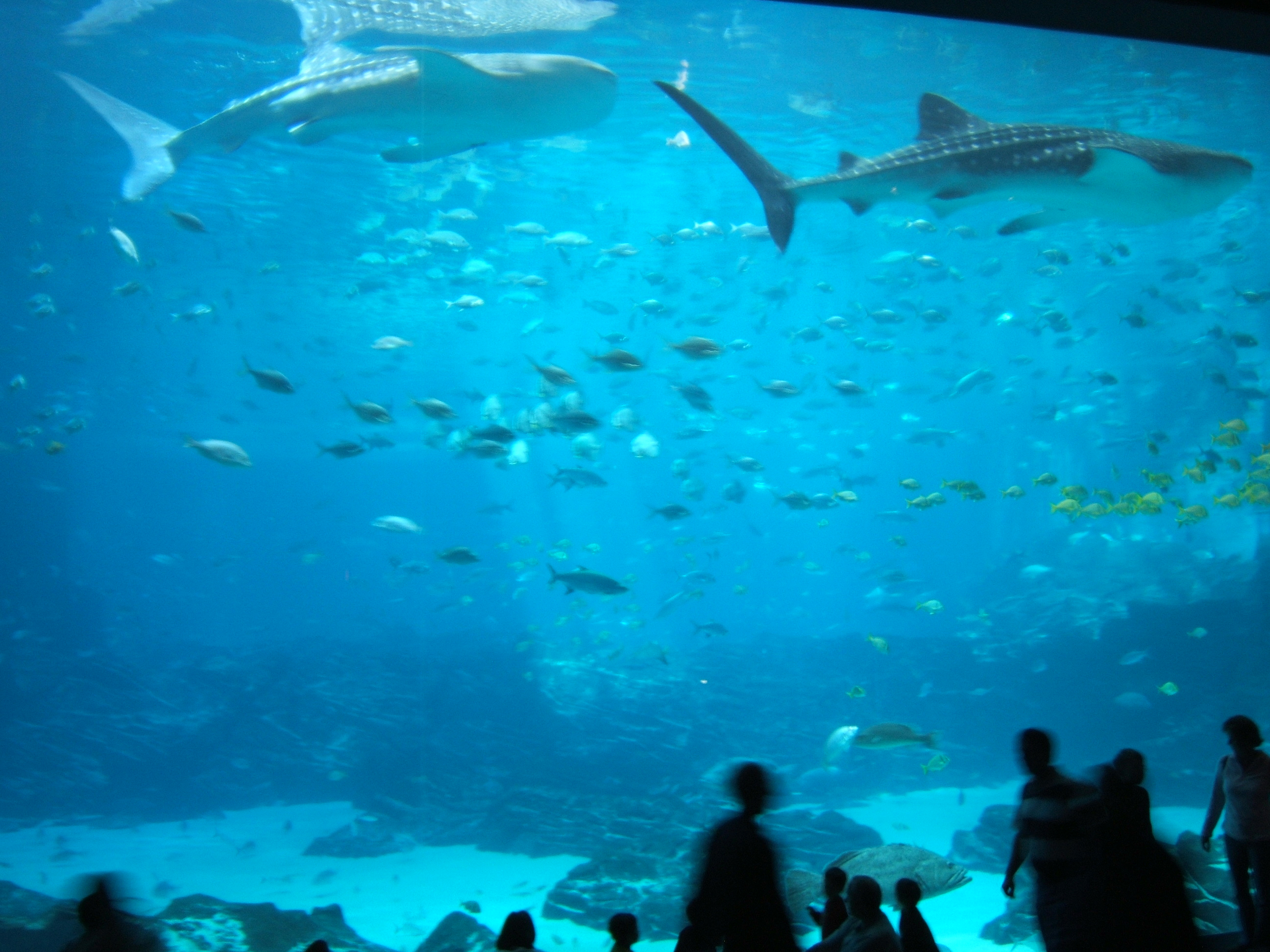 Aquarium Of The Pacific Night Dive