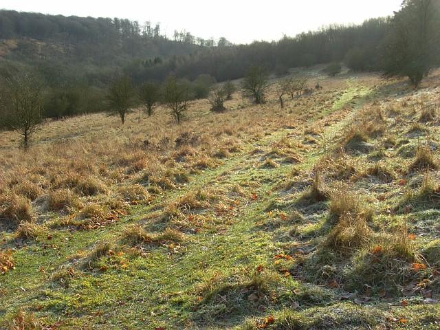 Grassland near Christmas Common - geograph.org.uk - 682228