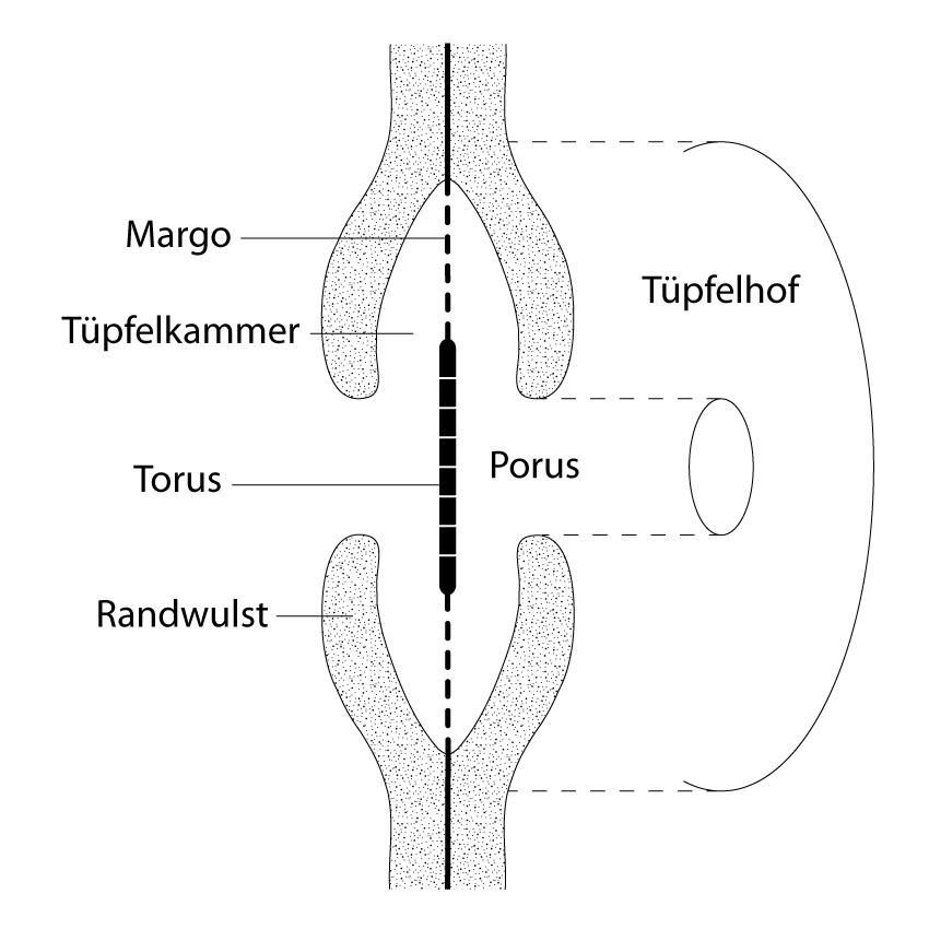 Tüpfel – Wikipedia