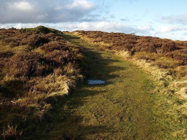 Lydeard Hill (2) - geograph.org.uk - 1140784