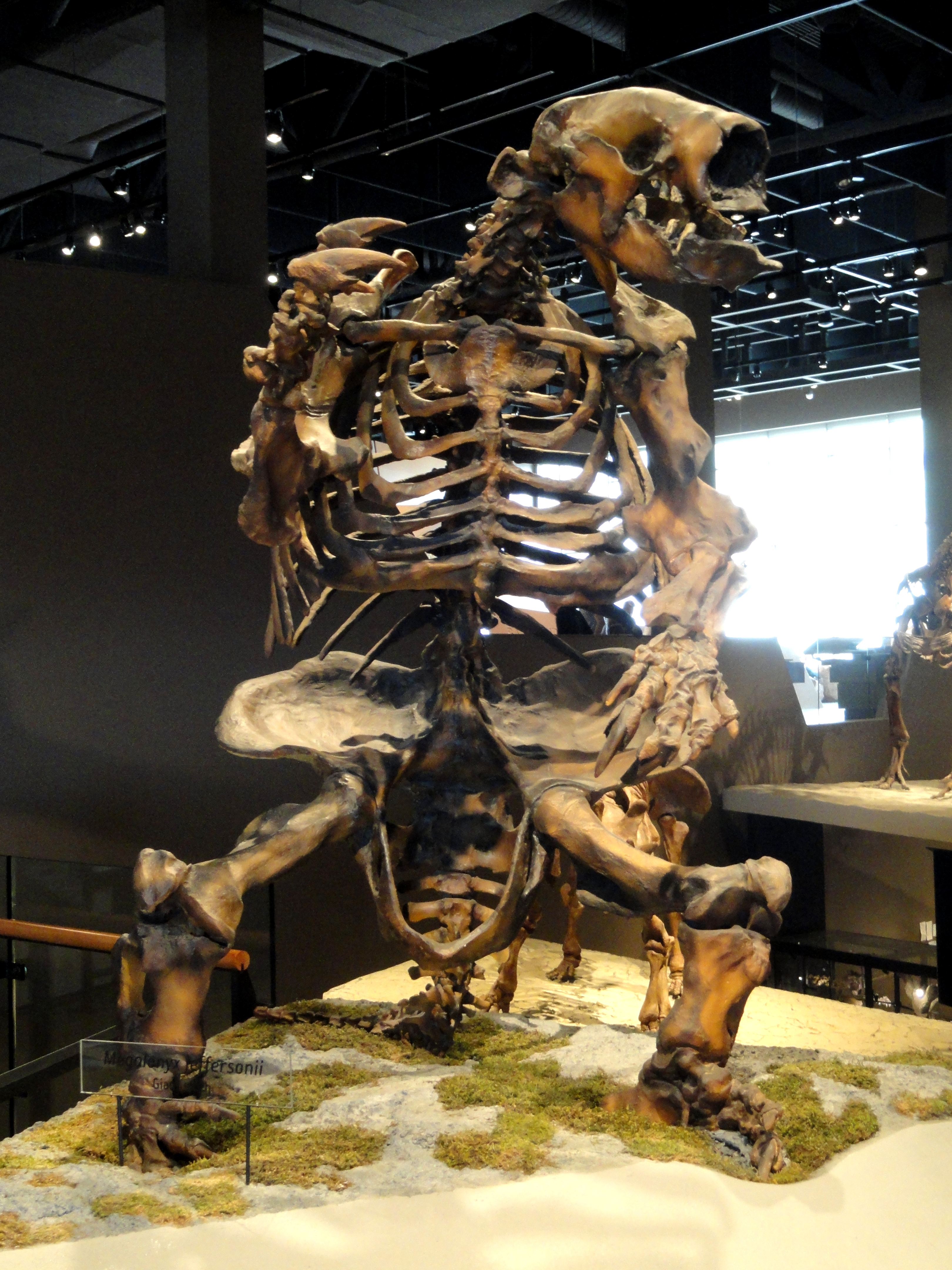 West Virginia Natural History Museum