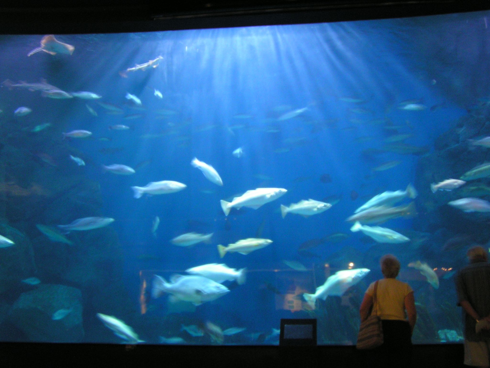 Aquarium In Wisconsin