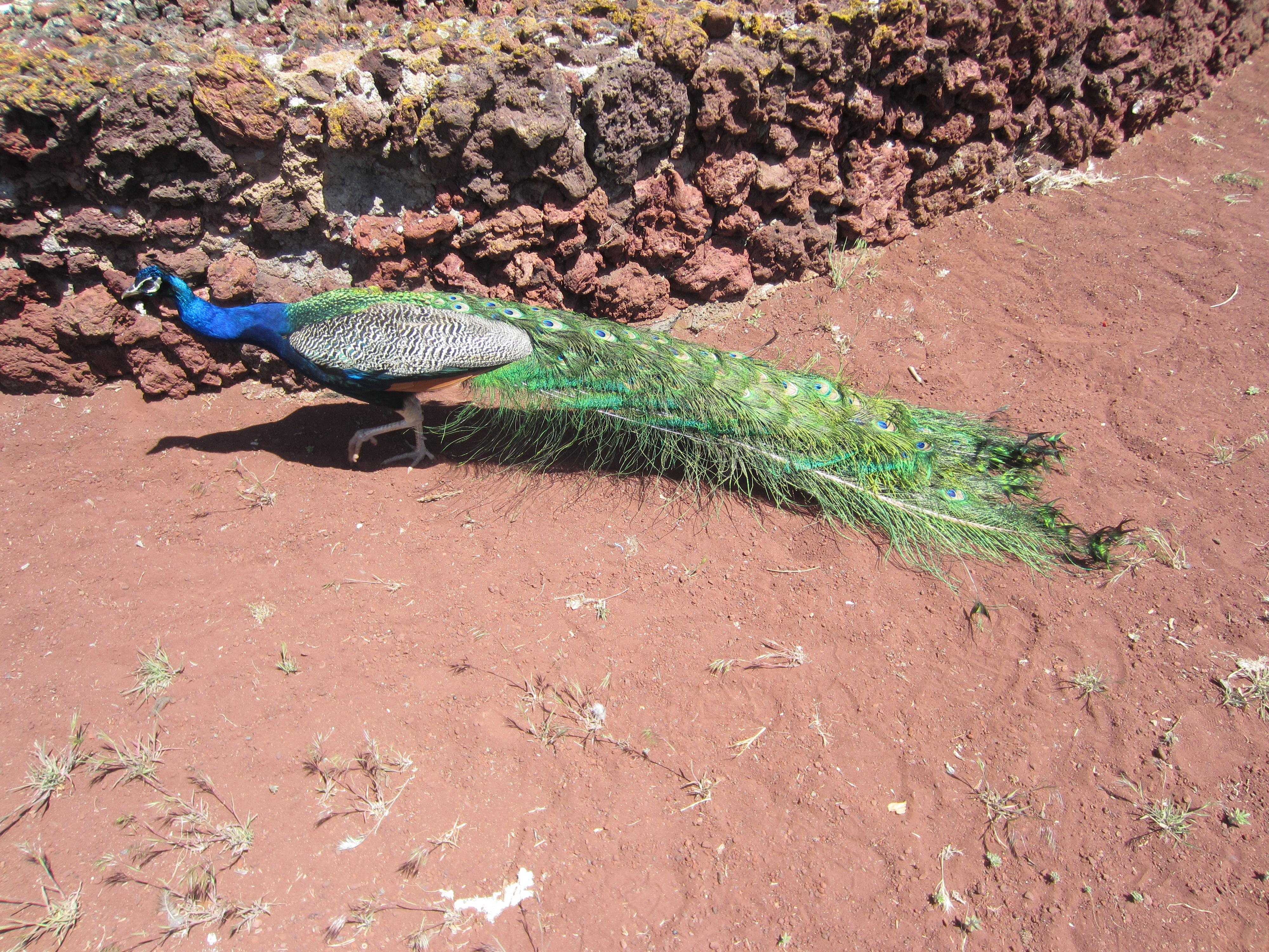 File:Petersen Rock Garden   Oregon (2013)   42.JPG
