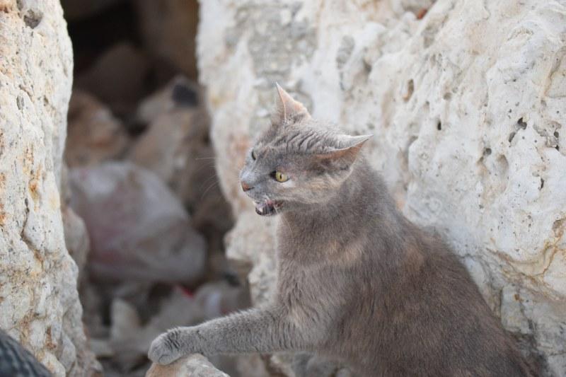 חתול, חוף גורדון, תל אביב