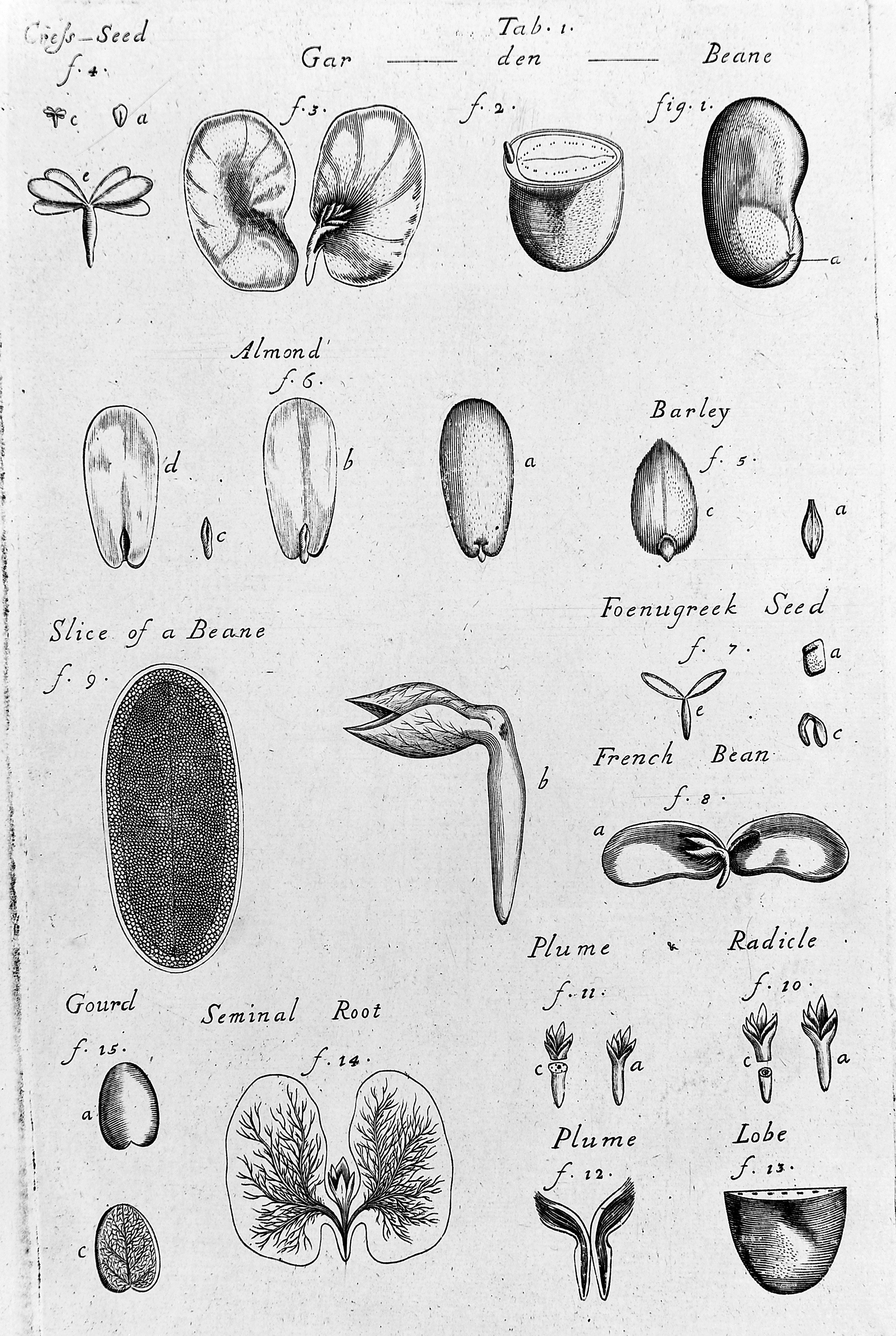 File:Plate showing the parts of various seeds. Wellcome M0012483.jpg ...