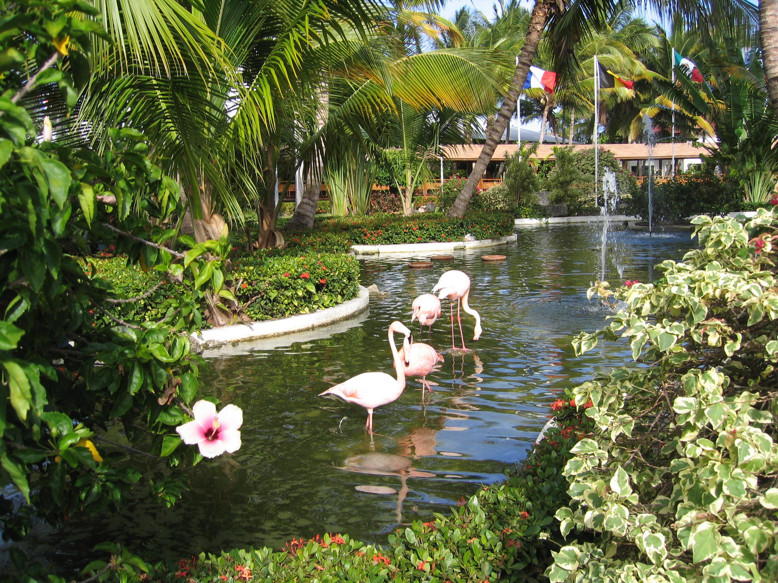 Grand Palladium Bavaro In Punta Cana Resort And Spa