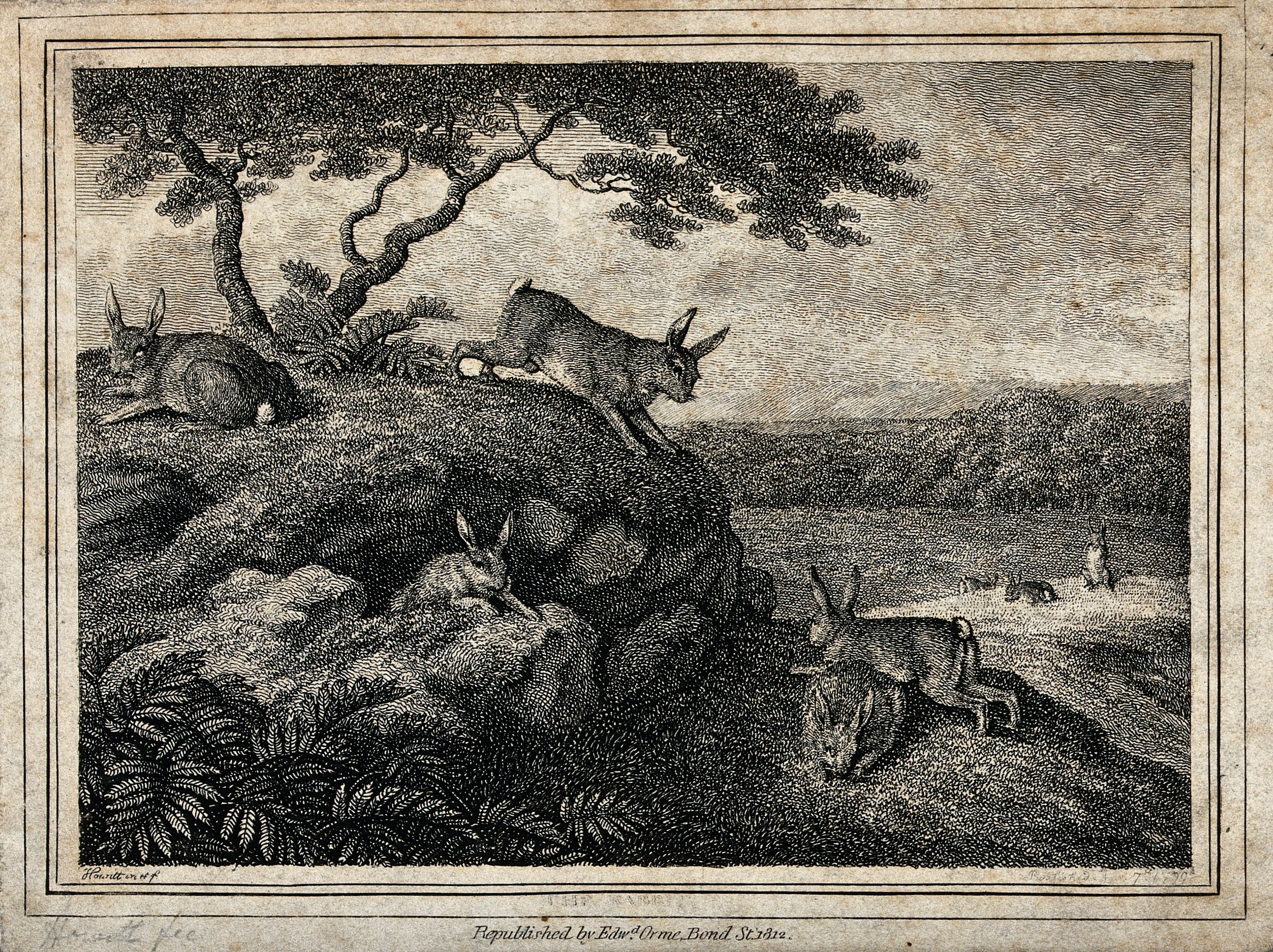 Rabbits playing and eating outside their burrow. Etching by W-S Howitt, ca 1798.