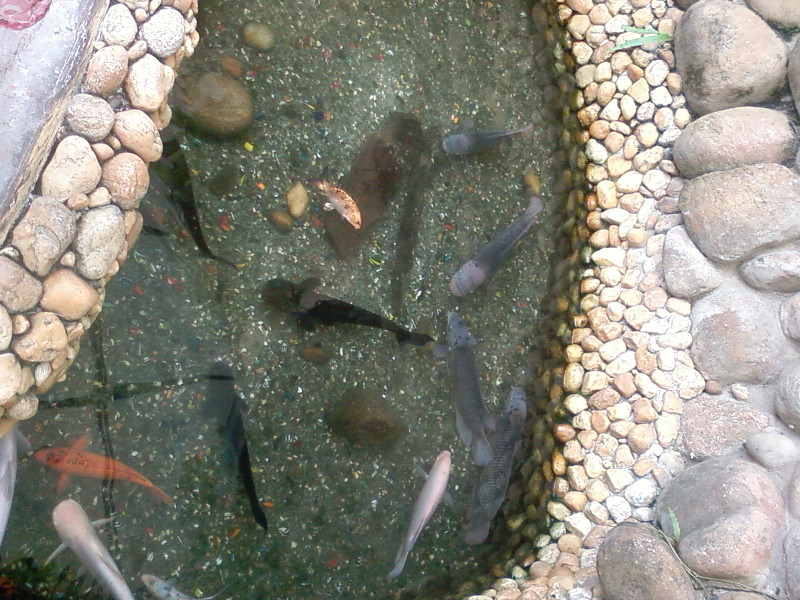 File Real Fishes In A Small Wikimedia Commons