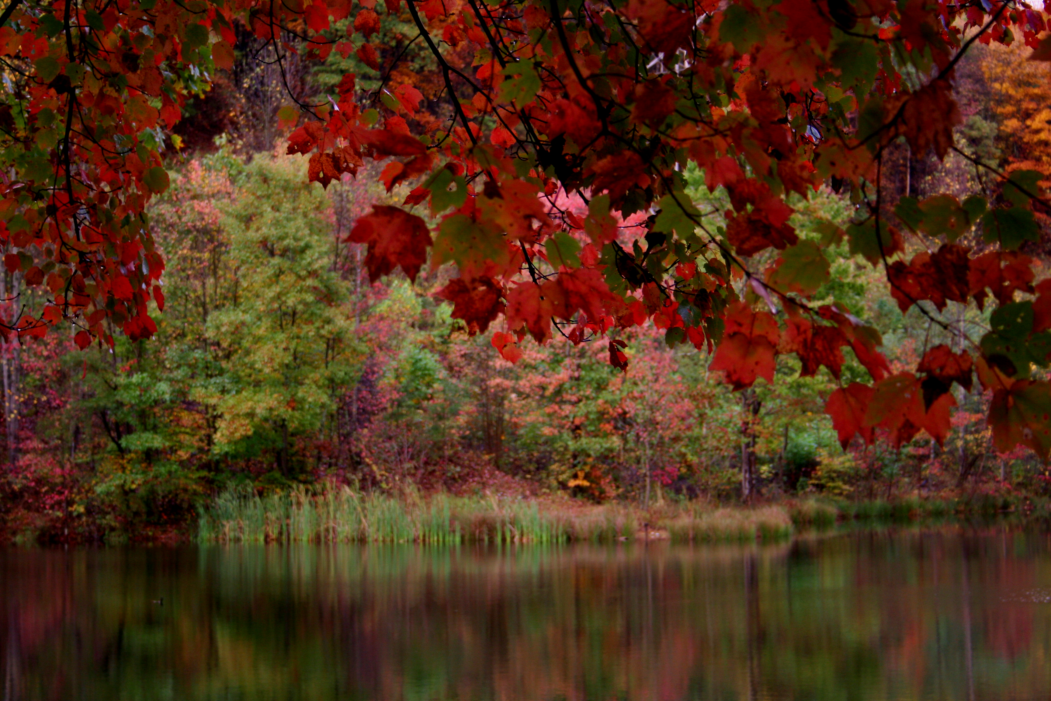 File:Red-fall-tree-lake - West Virginia - ForestWander.png